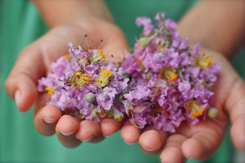 hands, child, flower